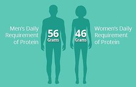 Male female diagram of daily protein intake.